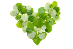 Leaf heart. Group of heart by green leaf Royalty Free Stock Photos