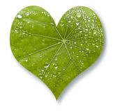 Leaf Heart Love. A heart shaped leaf with water drops stock images