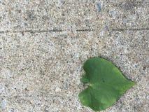 Leaf heart Stock Image