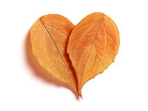 Leaf Hearts Stock Image