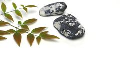 Leaf of heavenly bamboo in a white background Royalty Free Stock Images