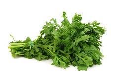 A leaf herb commonly Royalty Free Stock Image