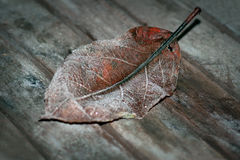 Leaf with hoar frost Stock Photo