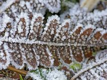 Leaf with hoar-frost in winter Stock Photography