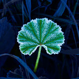 Leaf in hoarfrost Royalty Free Stock Photos