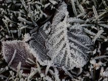Leaf with hoarfrost Stock Photos