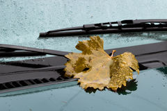 Leaf on the hood. Yellow leaf on the green car hood Stock Images