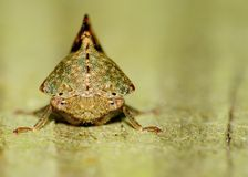 Leaf-hopper Stock Images