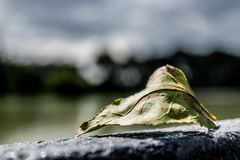 Leaf on the horizon royalty free stock images