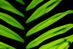 Leaf houseplant Royalty Free Stock Images