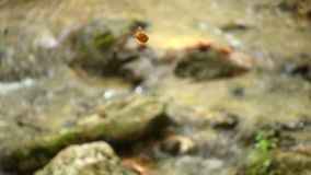 The leaf hovers above the stream stock video footage