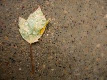 Leaf i regn Royaltyfri Foto
