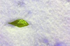Leaf i snowen Grönt blad på snöbakgrund Royaltyfri Bild