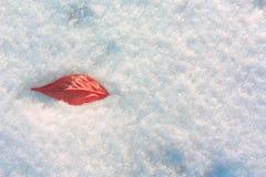 Leaf i snowen Rött blad på snöbakgrund Arkivbild