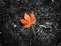 Leaf i ensamhet Arkivfoto