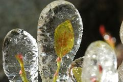 Leaf in ice Royalty Free Stock Photos