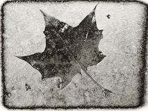 Leaf in ice Stock Images