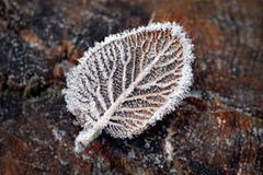 Leaf with ice crystals Royalty Free Stock Images