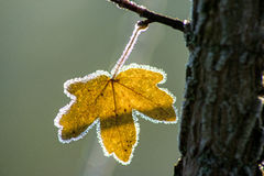 Leaf with ice crystals Royalty Free Stock Photo