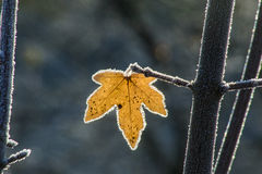 Leaf with ice crystals Stock Images