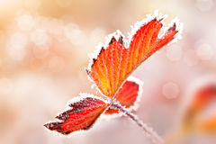 Leaf with ice lace Royalty Free Stock Photography