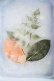 Leaf in ice Royalty Free Stock Photography