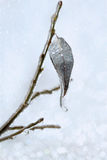 Leaf with an icicle on branch under a sleet Stock Photos