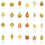 Leaf icon. Vector illustration of different kind of trees Royalty Free Stock Photography