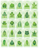 Leaf icon Stock Images