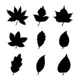 Leaf icon design Stock Image