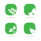 Leaf icon in green color vector Stock Photography