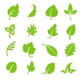 Leaf icon set. Fresh green leaves various shapes isolated on white background. Natural tree foliage, organic floral botany. Vector illustration Stock Photography