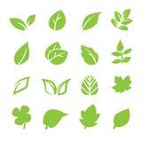 Leaf icon. Web icon illustration design vector Stock Photography