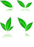 Leaf icons. Stock Photos