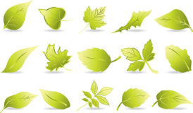 Leaf Icons Royalty Free Stock Image