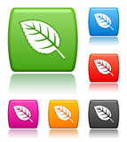 Leaf icons. Vector buttons with leaf icons Vector Illustration