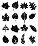 Leaf icons set. In black Stock Illustration