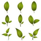 Leaf icons set Stock Image