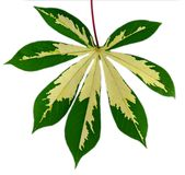 Leaf idea isolated Royalty Free Stock Images