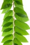 Leaf idea isolated Royalty Free Stock Image