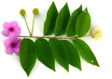Leaf idea isolated Stock Images