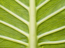 Leaf III. Leaf detail of the fen Royalty Free Stock Photos