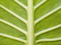 leaf iii Royaltyfria Foton