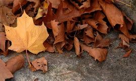 Leaf III. Dried leaf stock photo