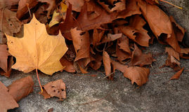 leaf iii Arkivfoto