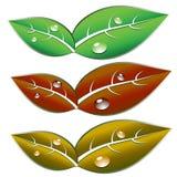 Leaf Illustration Royalty Free Stock Image
