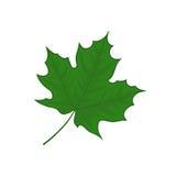 Leaf illustration Royalty Free Stock Images