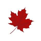 Leaf illustration. Red leaf illustration on white background Stock Image