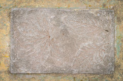 .Leaf impression in stone Stock Photography