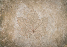 .Leaf impression in stone Royalty Free Stock Image